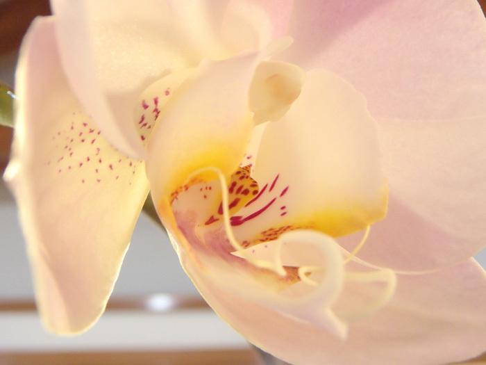 ピンクが咲いた_c0120834_11540324.jpg