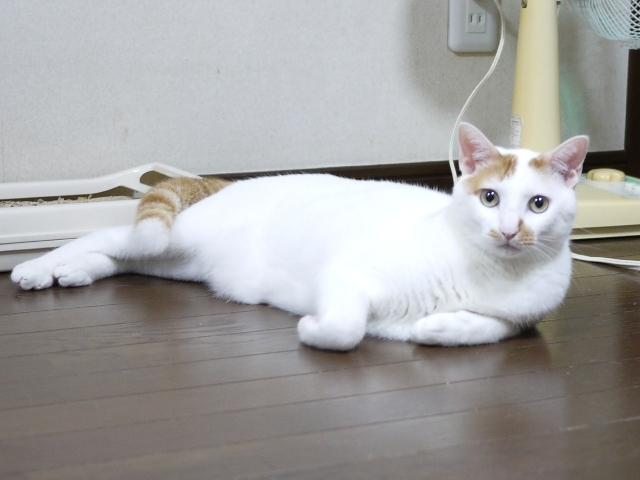 猫のお留守番 ミーくん編。_a0143140_20502958.jpg
