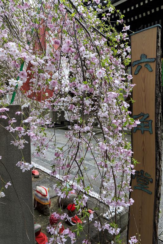2020桜咲く京都 御幸桜咲く六角堂_f0155048_23544450.jpg