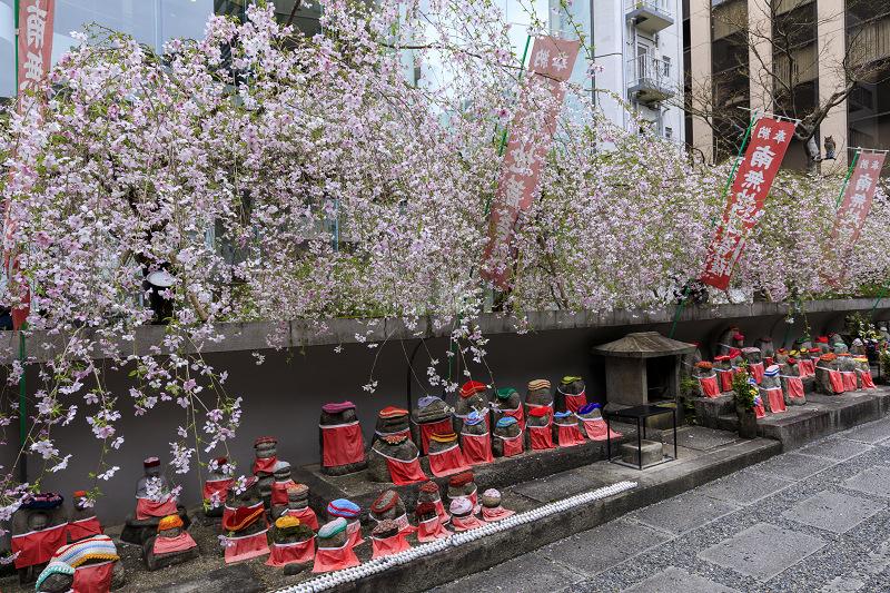 2020桜咲く京都 御幸桜咲く六角堂_f0155048_23545795.jpg