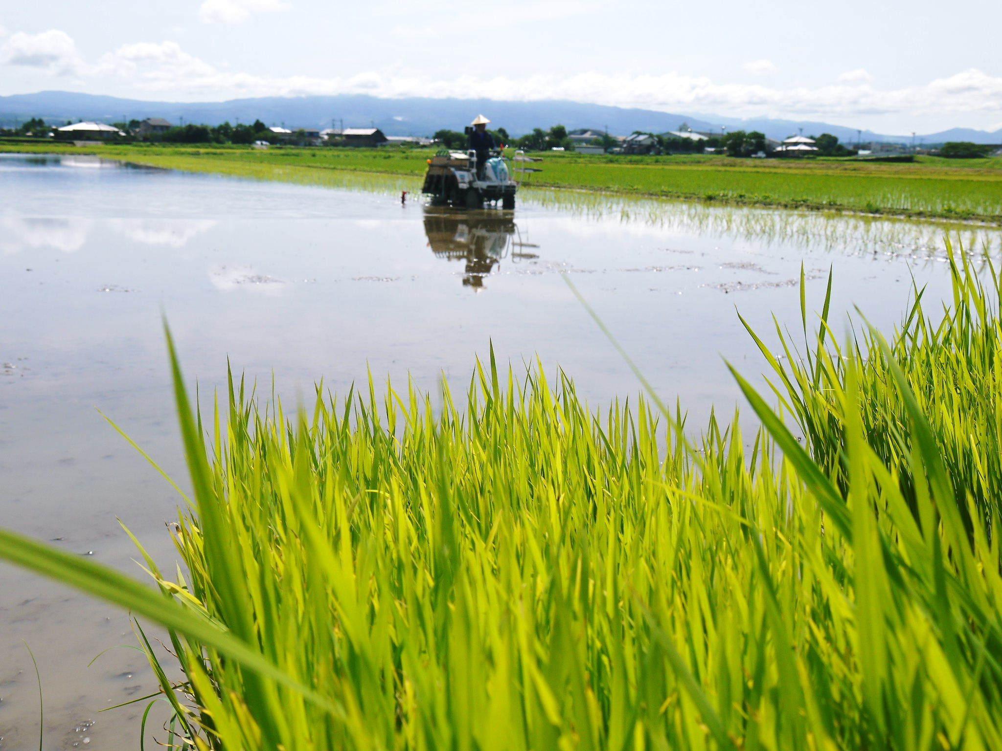 砂田のこだわりれんげ米 田植えの様子(2020) 前編:今年も変わらずれんげを有機肥料にした田んぼです_a0254656_17074305.jpg