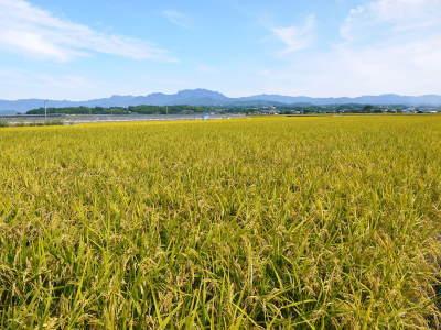 砂田のこだわりれんげ米 田植えの様子(2020) 前編:今年も変わらずれんげを有機肥料にした田んぼです_a0254656_17132982.jpg