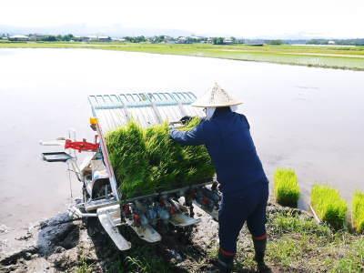 砂田のこだわりれんげ米 田植えの様子(2020) 前編:今年も変わらずれんげを有機肥料にした田んぼです_a0254656_17243026.jpg