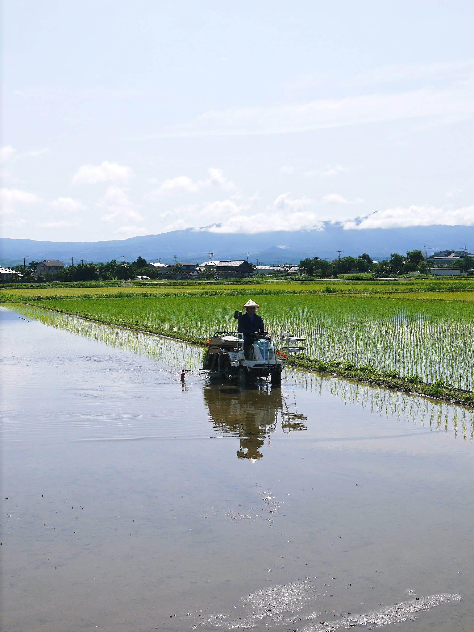 砂田のこだわりれんげ米 田植えの様子(2020) 前編:今年も変わらずれんげを有機肥料にした田んぼです_a0254656_17313207.jpg