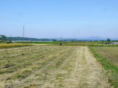 砂田のこだわりれんげ米 田植えの様子(2020) 前編:今年も変わらずれんげを有機肥料にした田んぼです_a0254656_17412347.jpg