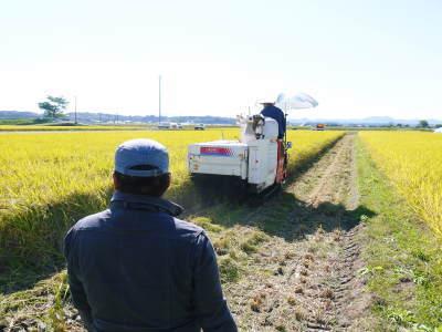 砂田のこだわりれんげ米 田植えの様子(2020) 前編:今年も変わらずれんげを有機肥料にした田んぼです_a0254656_17445771.jpg
