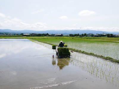 砂田のこだわりれんげ米 田植えの様子(2020) 前編:今年も変わらずれんげを有機肥料にした田んぼです_a0254656_18095434.jpg