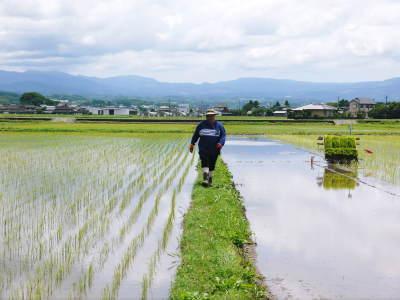 砂田のこだわりれんげ米 田植えの様子(2020) 前編:今年も変わらずれんげを有機肥料にした田んぼです_a0254656_18123082.jpg