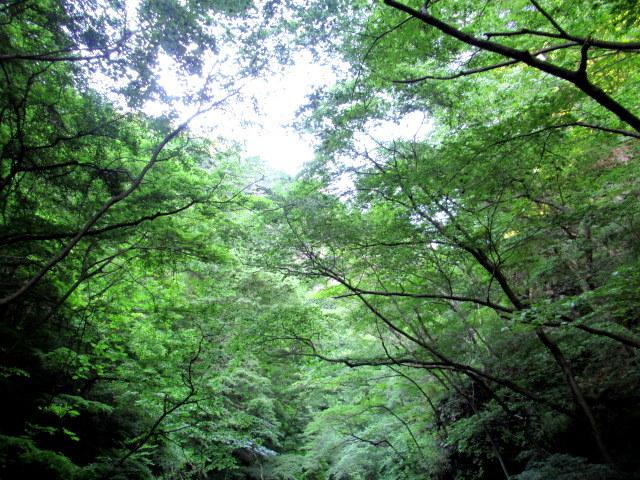 名勝 吾妻峡 * 梅雨の晴れ間、緑の渓谷に涼む♪_f0236260_21264414.jpg