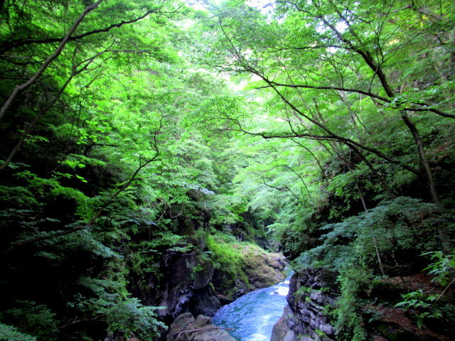 名勝 吾妻峡 * 梅雨の晴れ間、緑の渓谷に涼む♪_f0236260_21270894.jpg