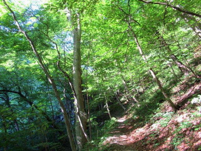 名勝 吾妻峡 * 梅雨の晴れ間、緑の渓谷に涼む♪_f0236260_21324629.jpg