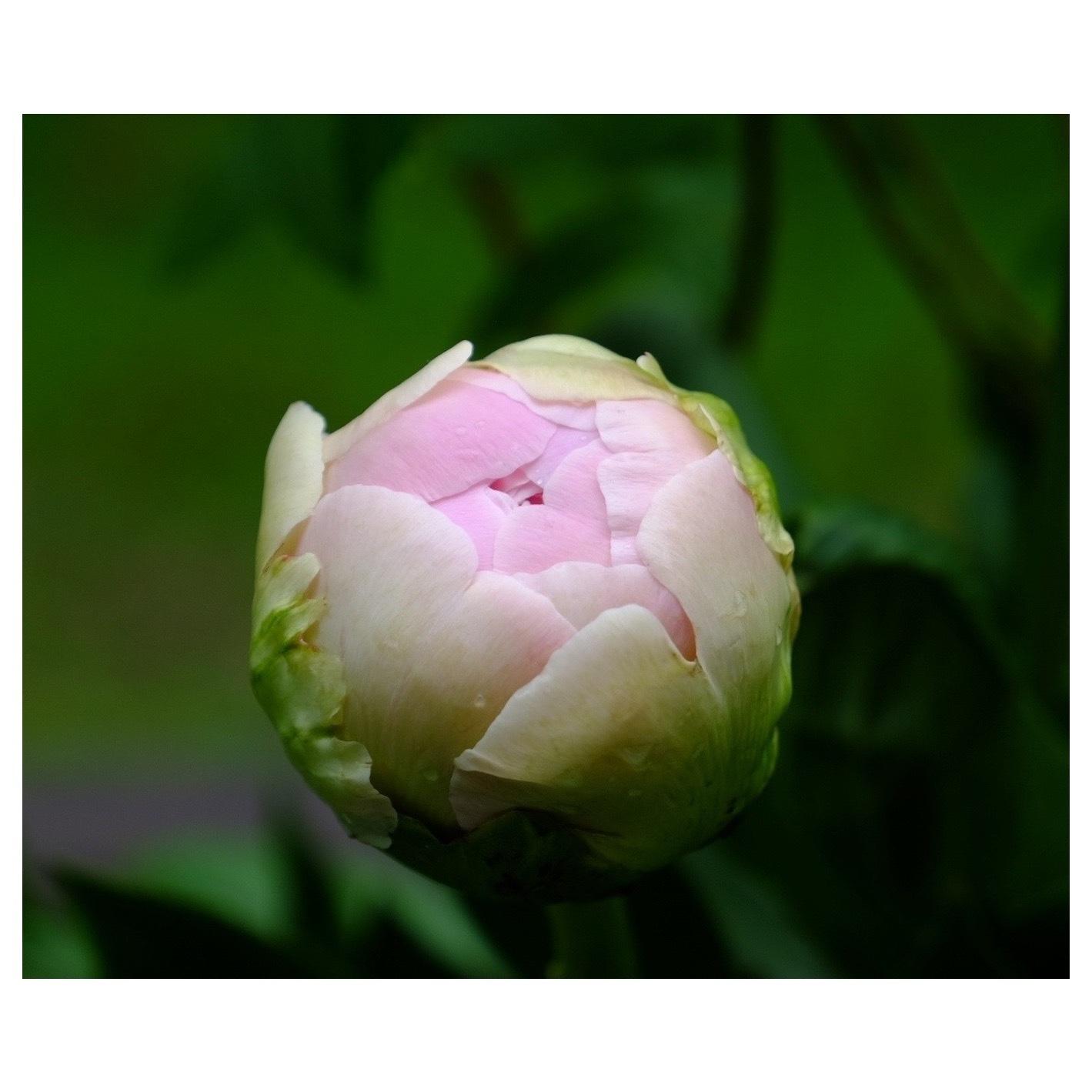 LADAK Flower Studio_a0335867_10195914.jpeg