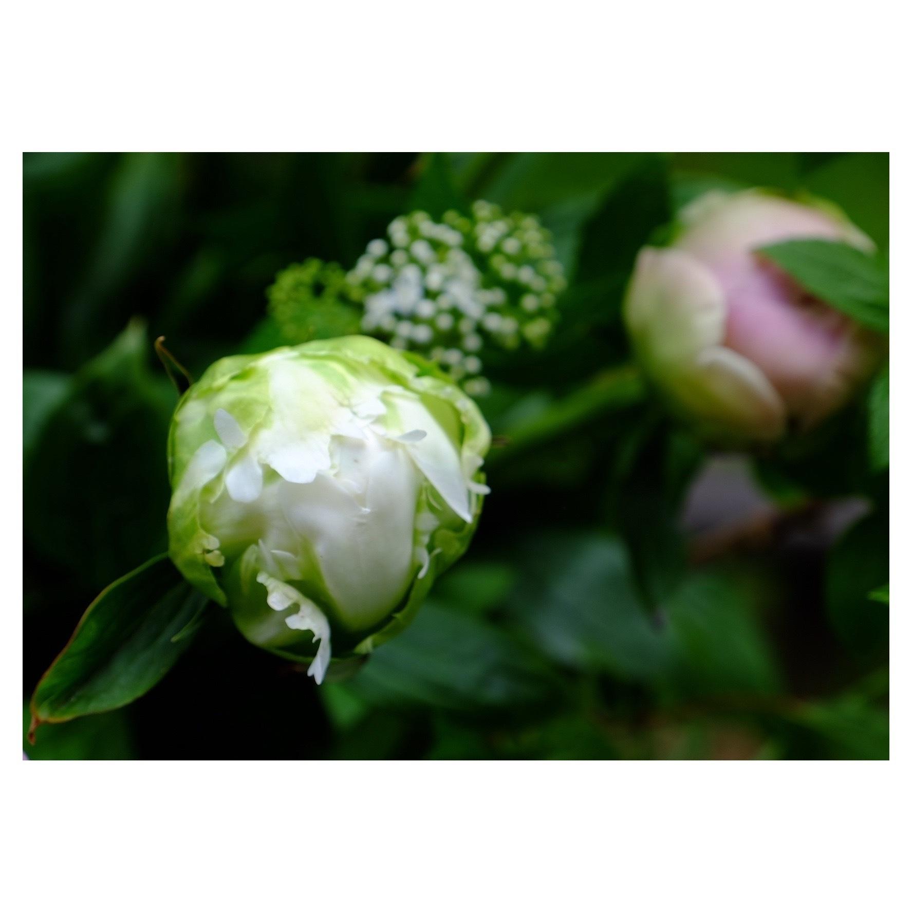 LADAK Flower Studio_a0335867_10212408.jpeg