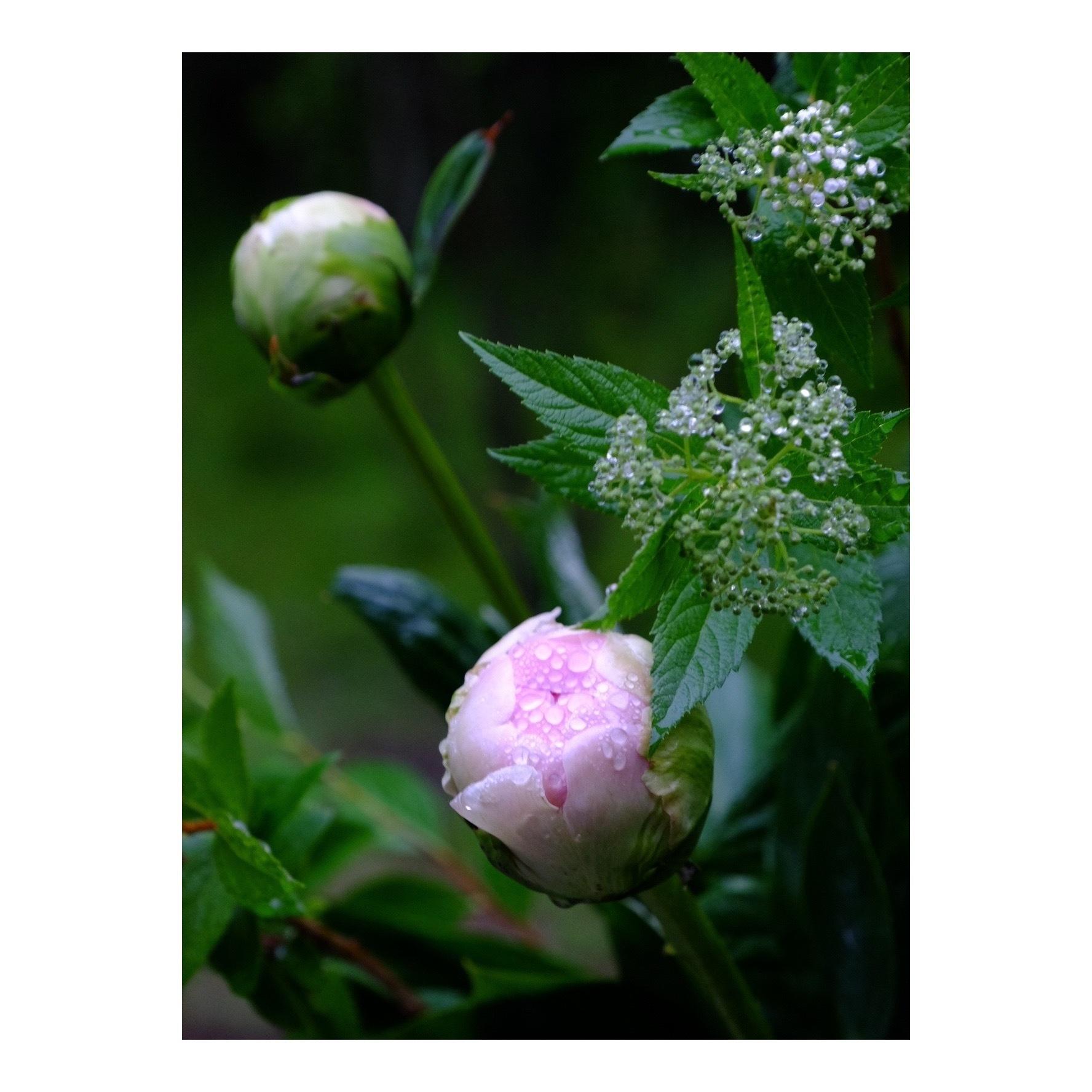 LADAK Flower Studio_a0335867_10250944.jpeg