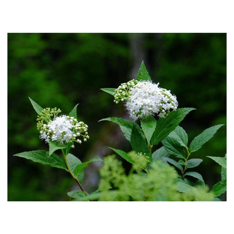 LADAK Flower Studio_a0335867_10263628.jpeg