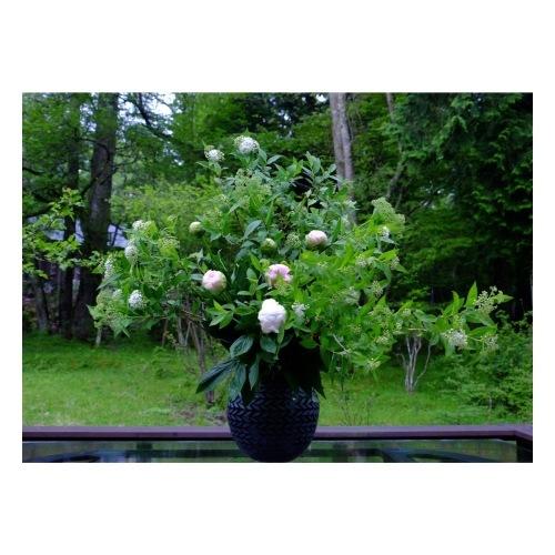 LADAK Flower Studio_a0335867_10280157.jpeg