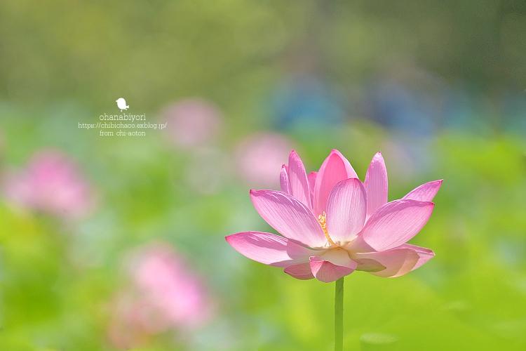お花びより_c0319774_14403218.jpg