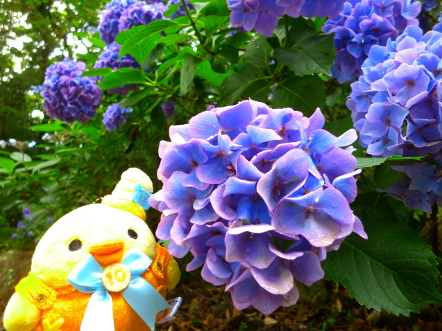 ☆トリ旅ウォーキングDAY☆_f0351775_21122265.jpg