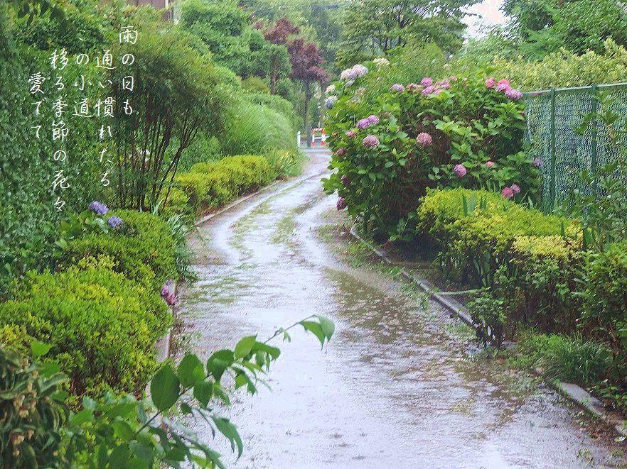 雨の散歩道_c0187781_18175626.jpg