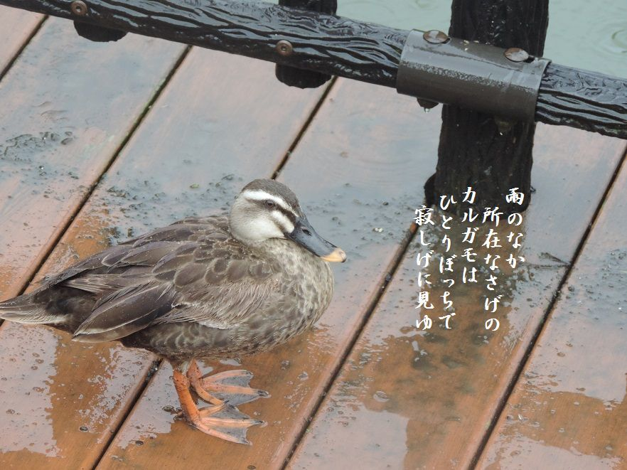 雨の散歩道_c0187781_18195832.jpg