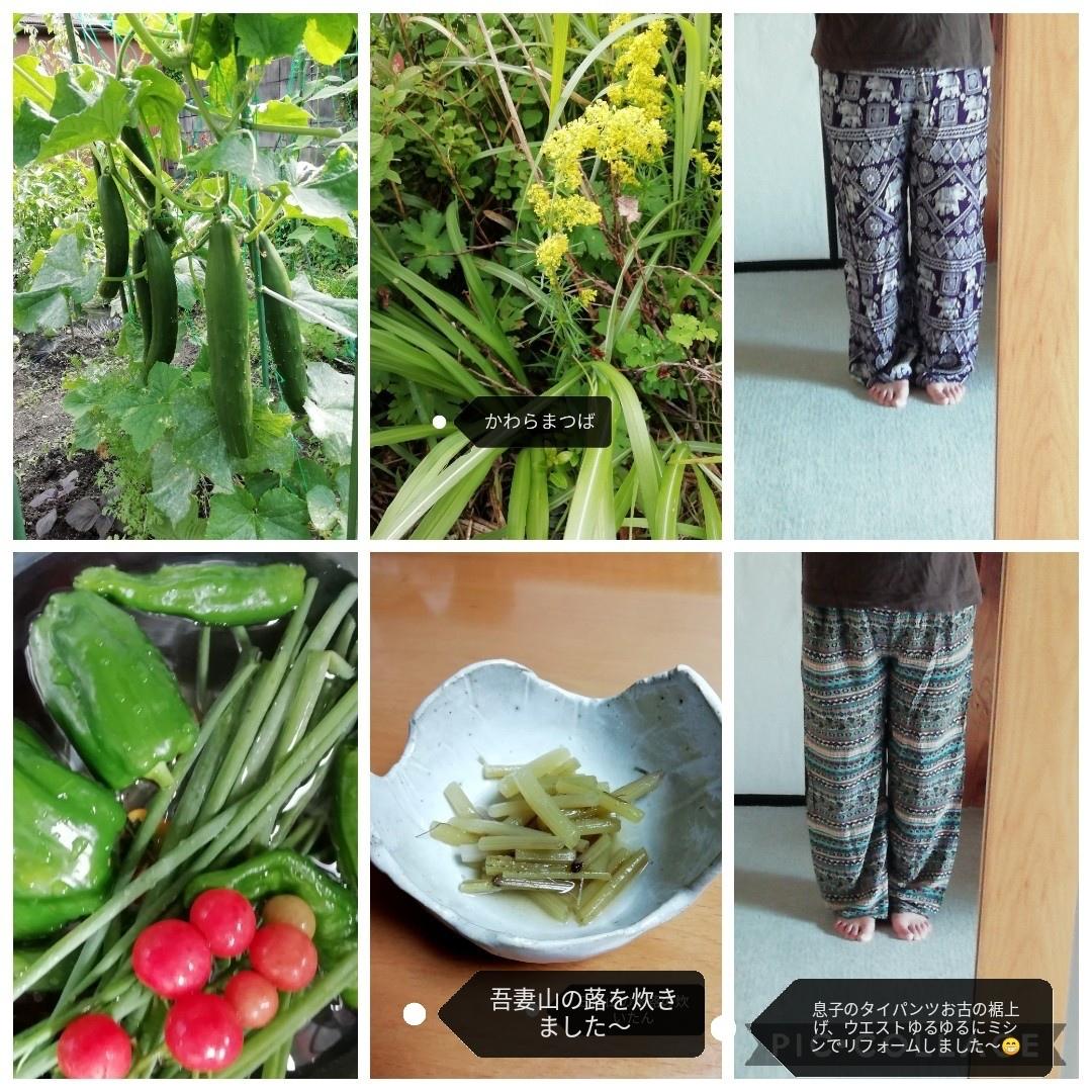 花の山歩き_b0235586_10151464.jpg