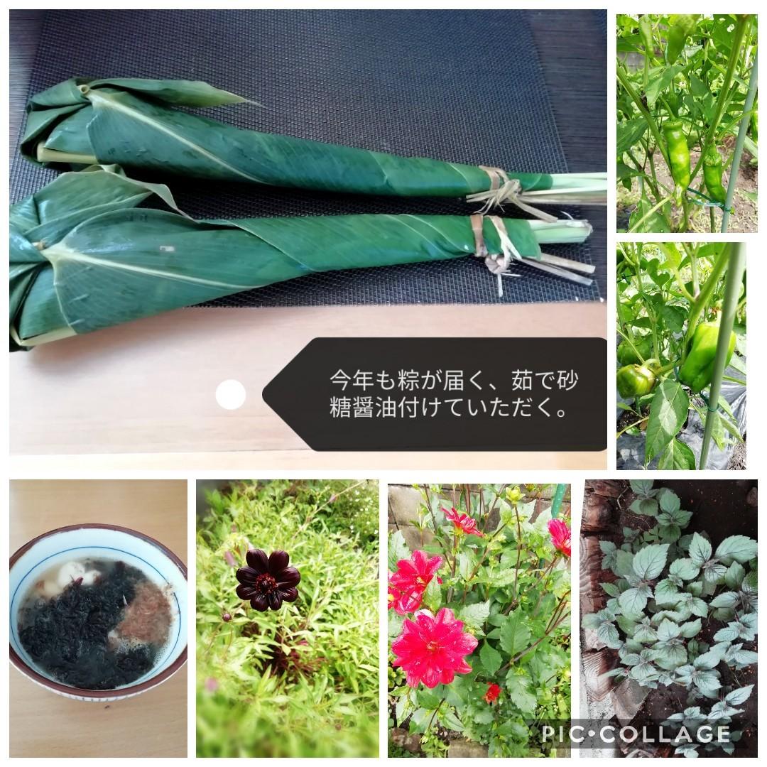 花の山歩き_b0235586_10153012.jpg