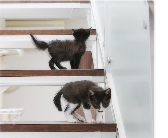 子猫と階段_a0389088_02413866.jpg