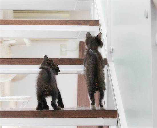 子猫と階段_a0389088_02413876.jpg