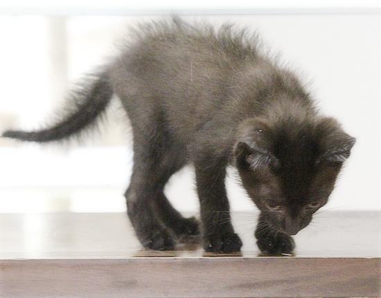 子猫と階段_a0389088_02413880.jpg