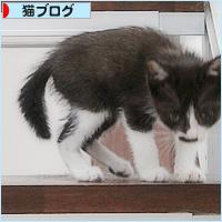 子猫と階段_a0389088_02413884.jpg