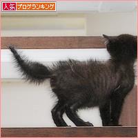 子猫と階段_a0389088_02413898.jpg