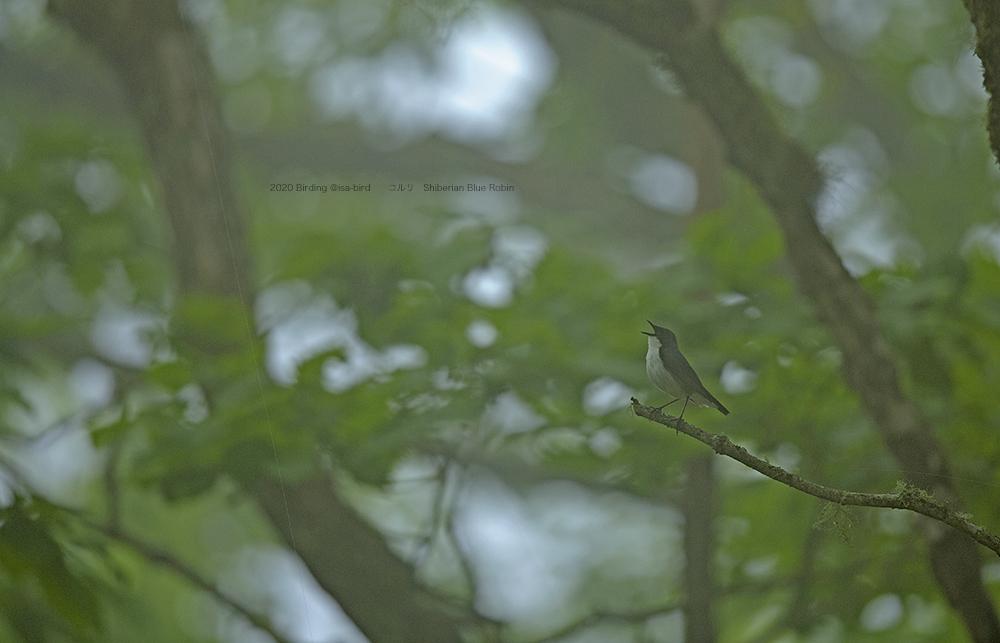 ちょっと欲張って高原の林道も覗いてみます_d0164892_21092066.jpg