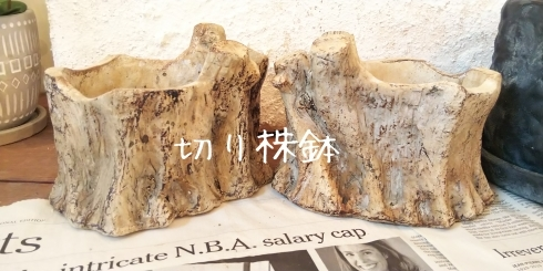 オブツーサと切り株鉢_b0261827_16254742.jpg