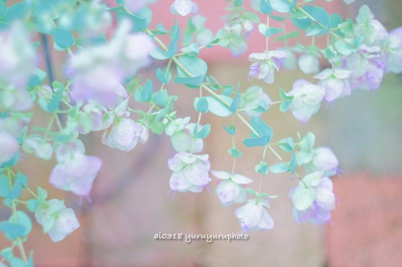 オレガノの花。_b0304227_05522552.jpg