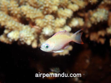 7月1日幼魚いっぱい水納島_c0070933_21262289.jpg