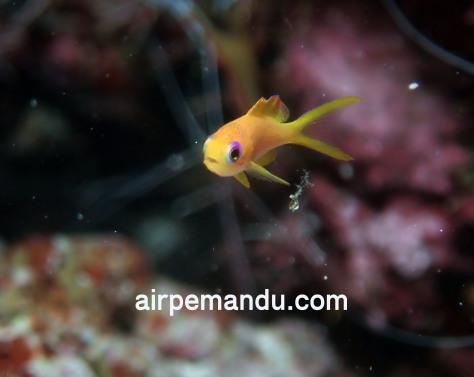 7月1日幼魚いっぱい水納島_c0070933_21265486.jpg