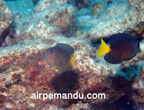 7月1日幼魚いっぱい水納島_c0070933_21265944.jpg