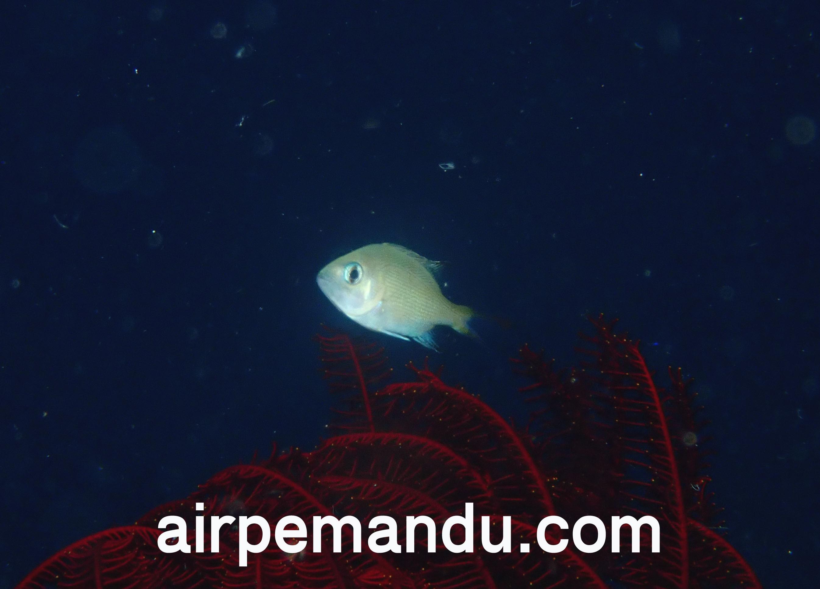 7月1日幼魚いっぱい水納島_c0070933_21271131.jpg