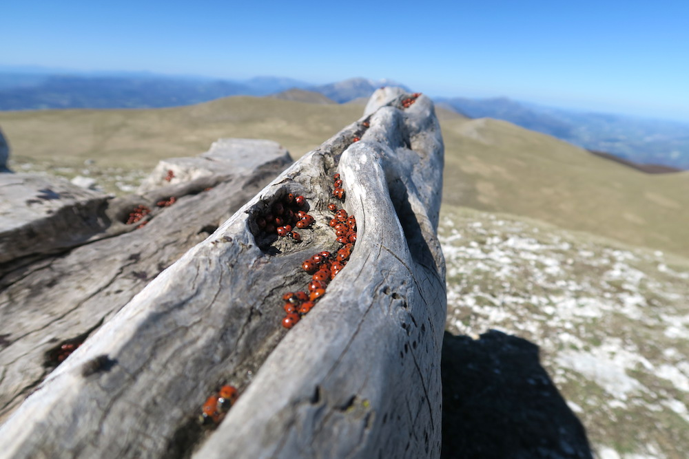 眺めよし攻撃びっくり魔女の山 Monte della Strega_f0234936_2223849.jpg