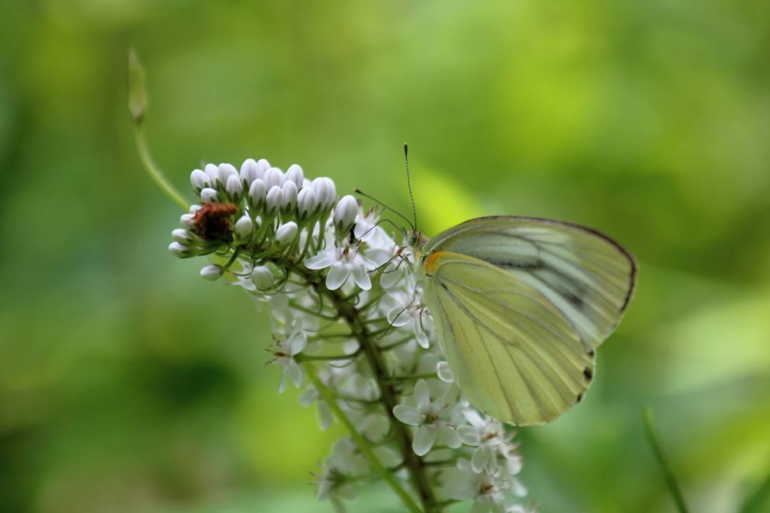 花と蝶 6/28_e0403850_19520840.jpg