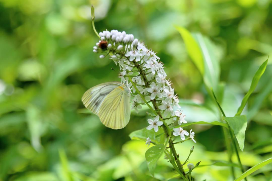 花と蝶 6/28_e0403850_19521350.jpg
