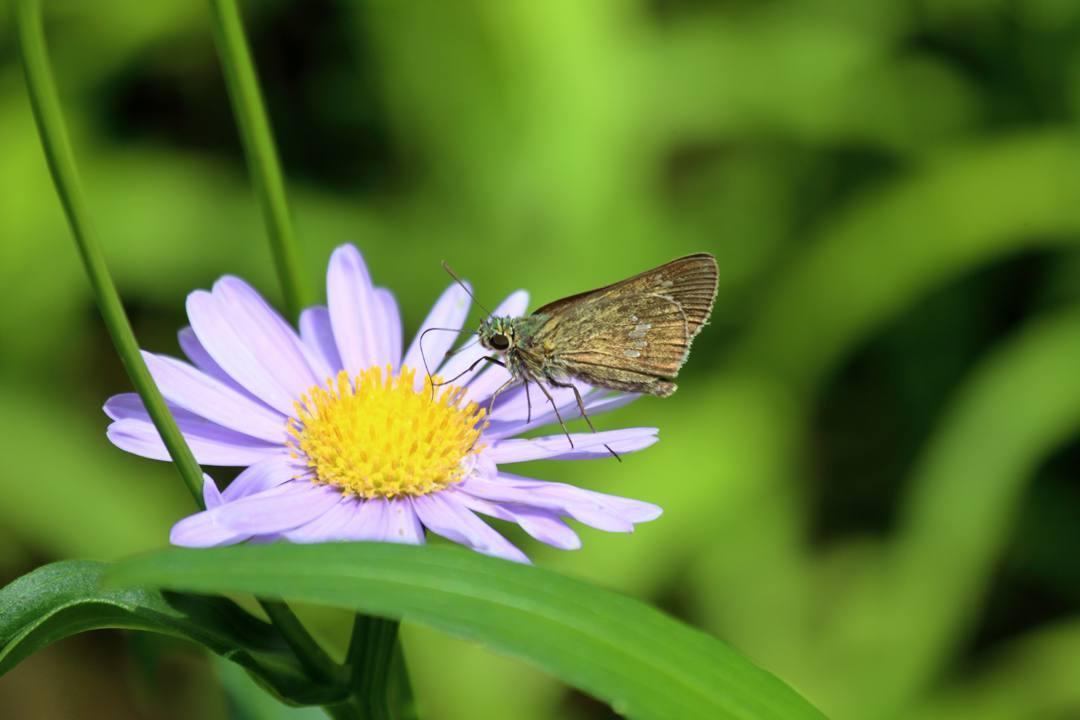 花と蝶 6/28_e0403850_19521733.jpg