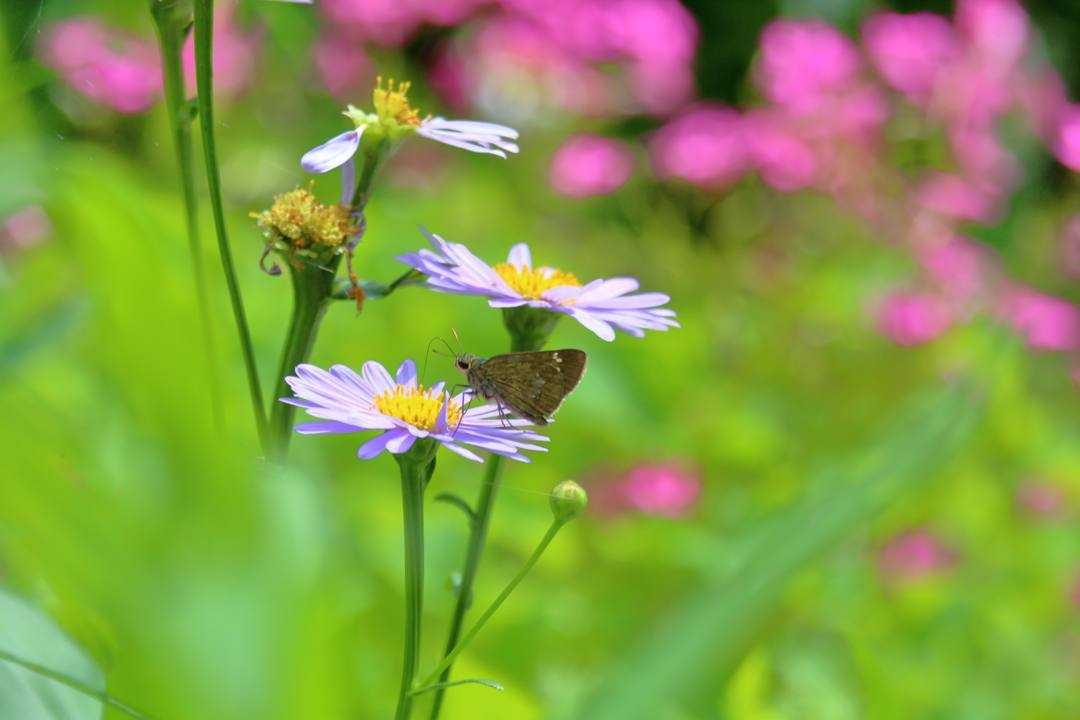 花と蝶 6/28_e0403850_19522551.jpg