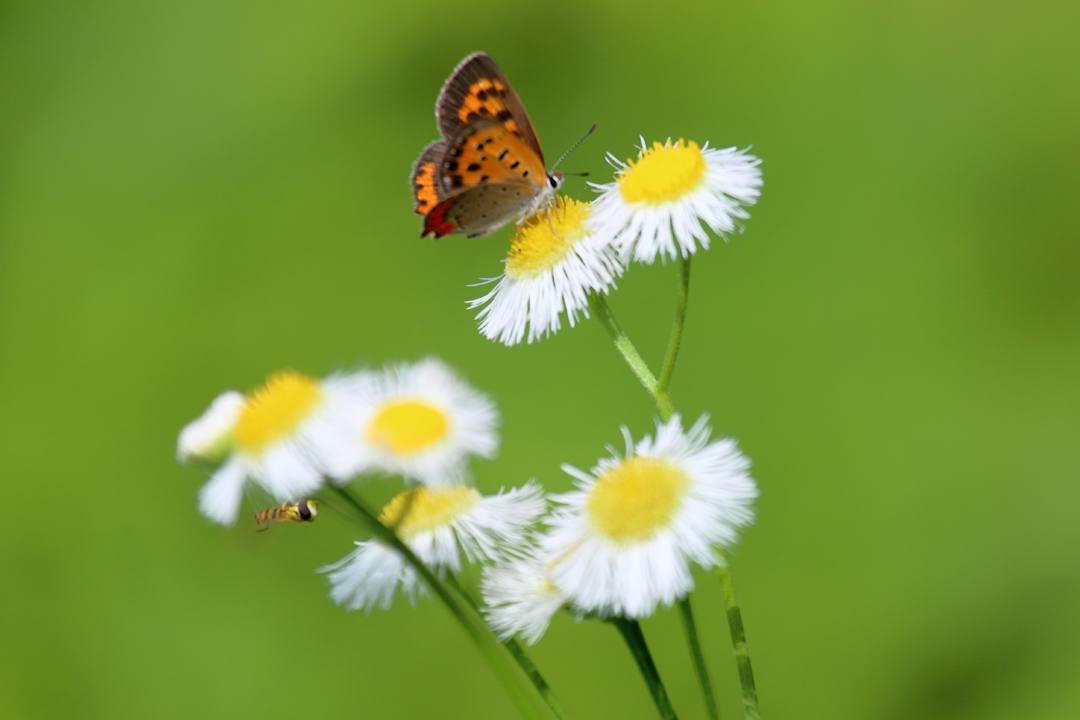 花と蝶 6/28_e0403850_19522981.jpg
