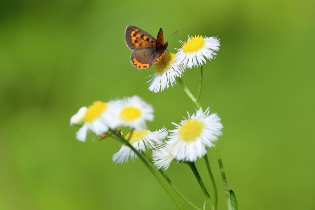 花と蝶 6/28_e0403850_19523338.jpg