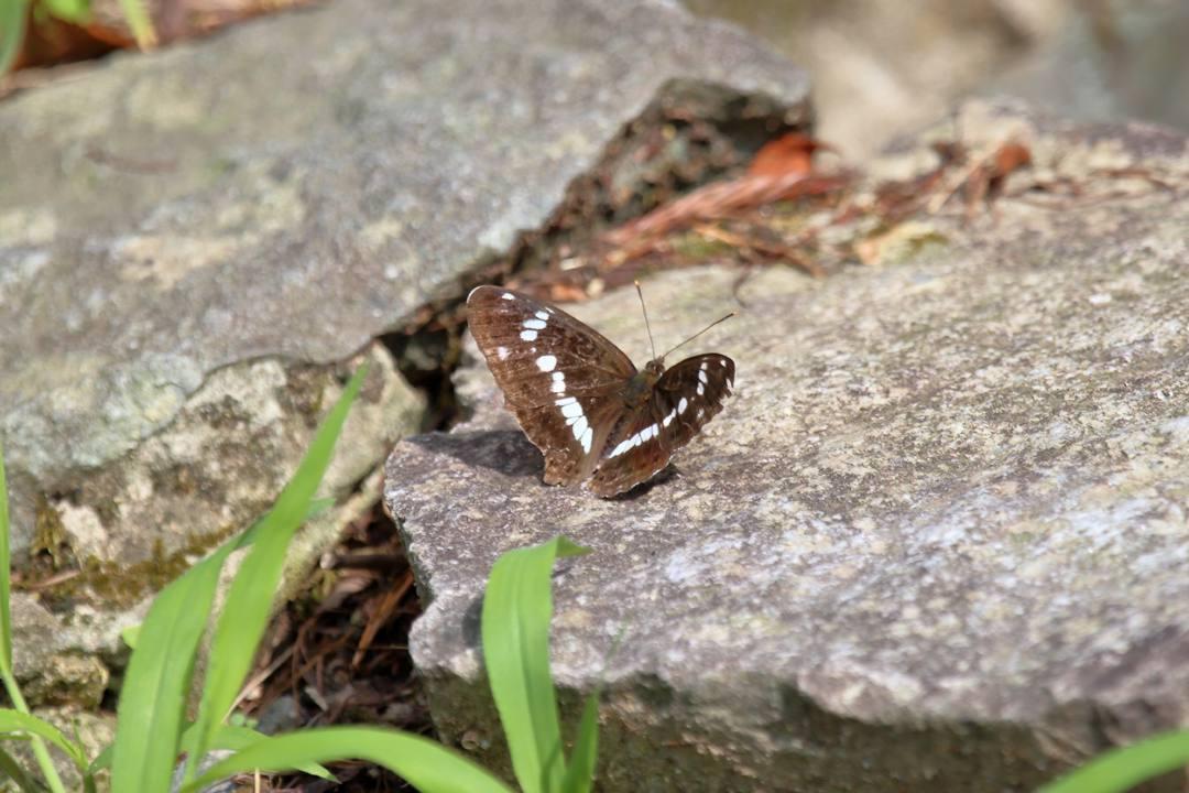 花と蝶 6/28_e0403850_19524061.jpg