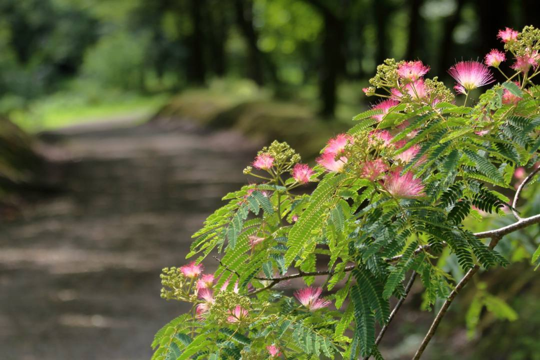 花と蝶 6/28_e0403850_19524802.jpg