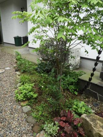 梅雨の晴れ間。したたる緑。_e0356655_19453894.jpg