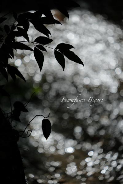 京都の写真最終^^ **_d0344864_21034930.jpg