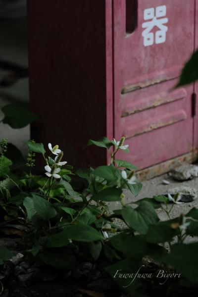 京都の写真最終^^ **_d0344864_21045478.jpg